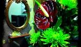 Saffron Hart gallery image 4